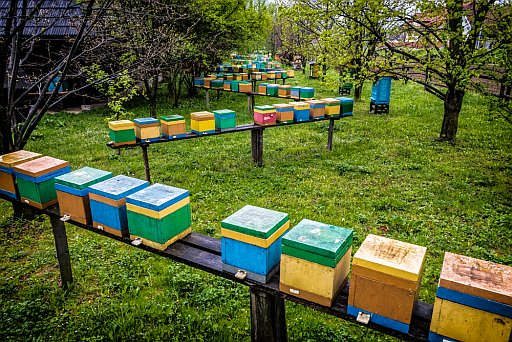 Beehives at the Stroże Beekeeping Museum/Hotel